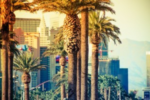 AdobeStock_71100579-vegas-palm-300x200